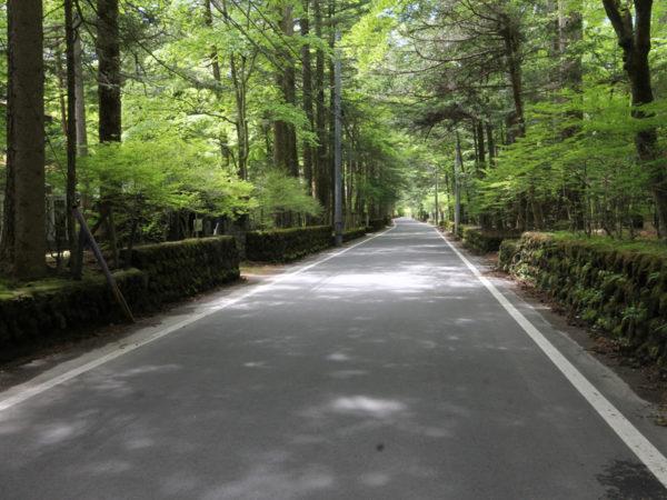 軽井沢カラマツ林