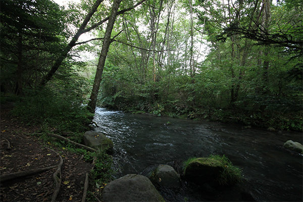 湯川ふるさと公園・渓流釣り